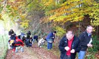 Volksheilkunde: Bucheckern sammeln